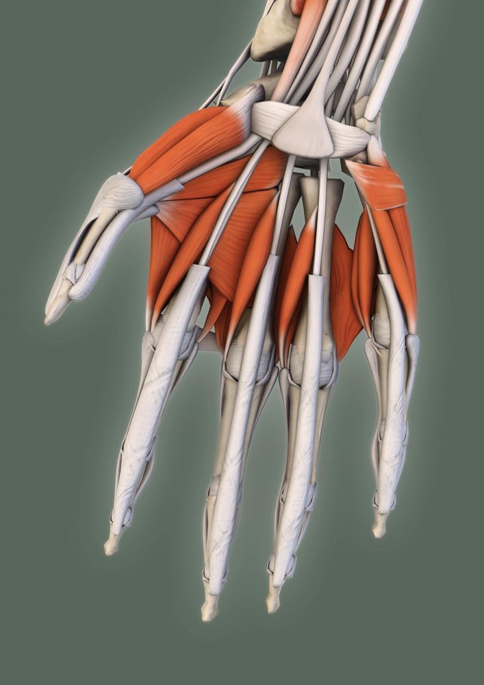Diferentes desarrollos y aplicaciones sobre anatomía 3D