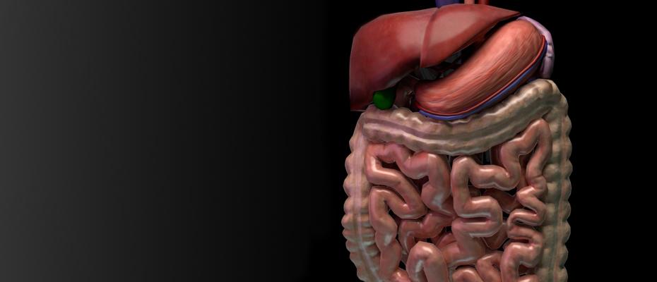 Simulador 3D de RM para Gastoenterología