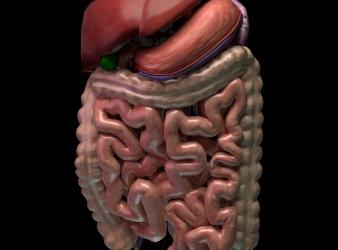 Simulador 3D de Resonancia Magnética para Gastroenterología