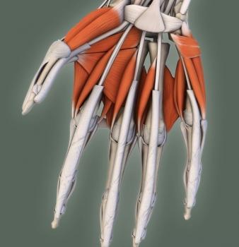 Modelos interactivos sobre anatomía 3D