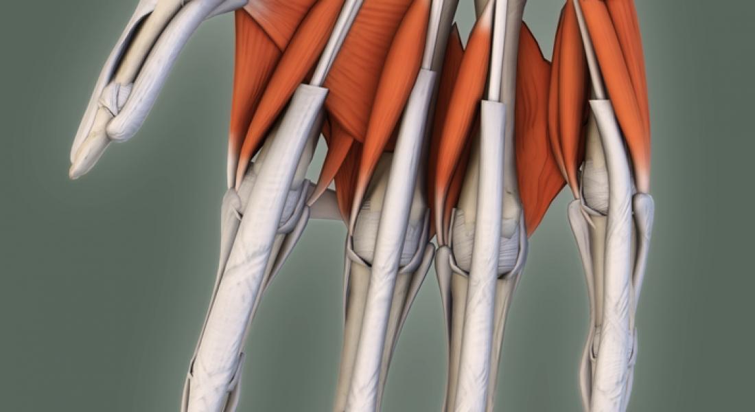 Átlas de anatomía 3D, modelos 3D online vía web